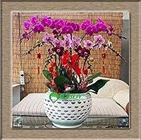 SEEDS PLAT会社・オーキッド盆栽、空気浄化種子、胡蝶蘭Orchids- 50個の種子
