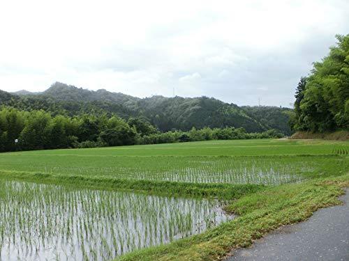 全農パールライス 鳥取県産こしひかり 白米 5kg 平成26年産