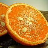 和歌山 有田産 幻の柑橘 カラマンダリン 3kg わけあり柑橘 ご家庭用 和歌山県 有田みかんの里から