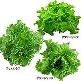 スマイルリーフ スピカ 無農薬野菜 レタス3種類 (6個入) -クール-