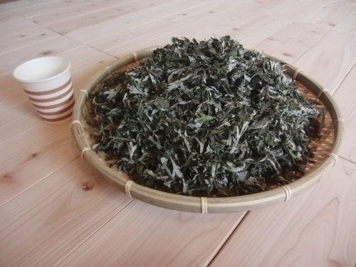 徳島産乾燥よもぎ 500g 平成28年産 よもぎ蒸し・よもぎ風呂用