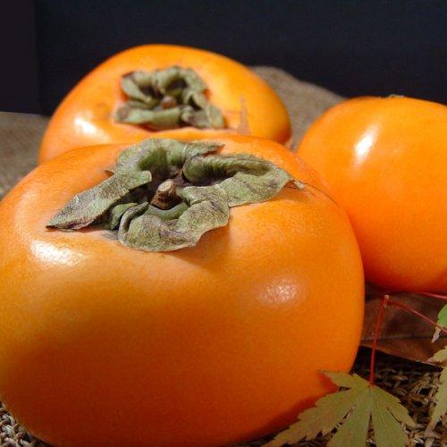 紀州 和歌山の柿 西浦さんちのフレッシュ 富有柿 約3.5〜4kg [14〜16個入] 特選ギフト 【赤秀】
