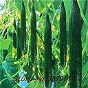 種子パッケージ: 果物や野菜の新品種の の50口さわやかな種子 全女性のシードサラダ