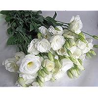 トルコキキョウ 八重 生花 切り花 ホワイト ニューリネーションWなど5本