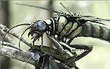 スーパービジュアル再現 羽毛恐竜と巨大昆虫 7つの謎で解き明かす太古の世界 画像