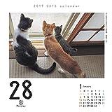 猫めくり 2019年 カレンダー リフィル 日めくり CK-C19-02 画像