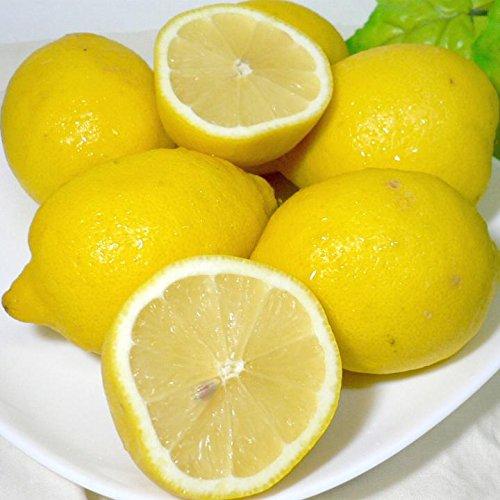 外国(アメリカ/チリ)産レモン 中玉約1kg 8個入