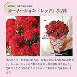 母の日 カーネーション 鉢植え フラワーギフト 5号鉢 (赤)