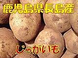鹿児島県長島産 じゃがいも (赤土) 1箱:約5kg入り じゃが芋 馬鈴薯 ジャガイモ