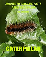 Caterpillar: Amazing Pictures and Facts About Caterpillar