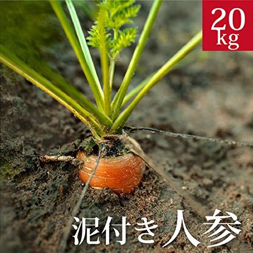 泥付き人参20kg 国産 無農薬【ゲルソン療法】にんじん ニンジン