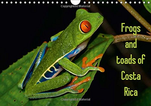 Frogs and Toads of Costa Rica / UK-Version 2017: Colorful Frogs and Toads of Costa Rica (Calvendo Animals)