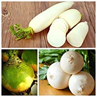 Turnip, Radish, Rutabaga (Swedish Turnip) - Set of Seeds of 3 Vegetable Plant Species - 3 Seed Packages