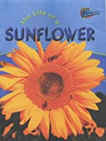 Raintree Perspectives: Life Cycles - the Life of a Sunflower