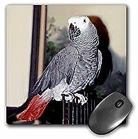3Dローズ 鳥 - アフリカン グレー パロット - マウス パッド - マウスパッド - mp_953_1 (並行輸入)