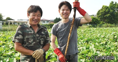 つくば山崎農園産ごぼう100% あじかん 焙煎ごぼう茶 (ティーバッグタイプ:30包入り)