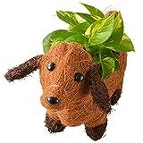 わんわんバスケット ポトス フラワーギフト 花鉢 観葉植物