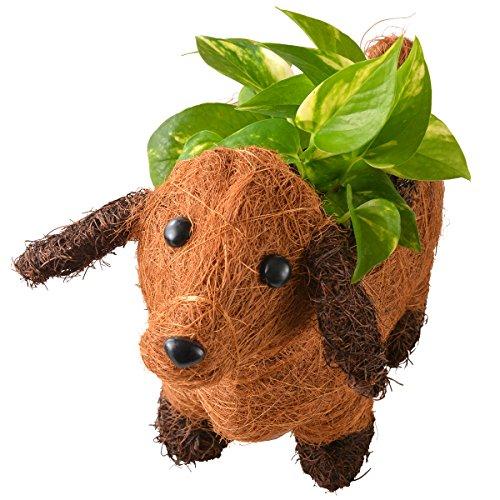 わんわんバスケット 観葉植物 ポトス フラワーギフト 鉢植え ...