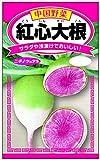 日本農産種苗 野菜のたね 紅心大根 鮮やかな見た目