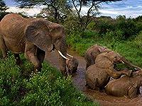 芸術はポスターを印刷します - ゾウの若い母親の思いやりのある泥入浴 - キャンバスの 写真 ポスター 印刷 (80cmx60cm)