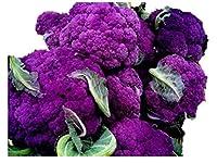 紫色カリフラワー 種 40粒