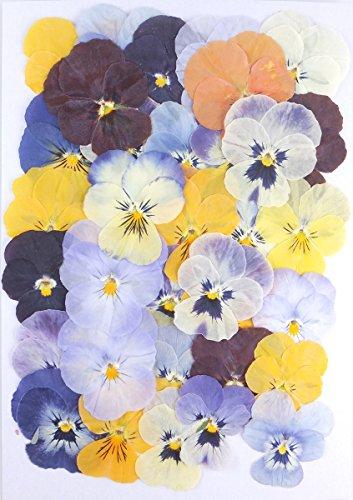 【お花屋さんの押し花セット ビオラMix】上質 押し花 ビオラ(つのたんビオラ入り) ハンドメイド UVレジンでスマホケースも作成可能