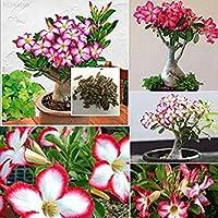 PLATのFIRM:FF1B 6C40 50個/袋ガーデン盆栽アデニウムObesum種子砂漠サプライ