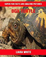 Box Turtle: Super Fun Facts And Amazing Pictures