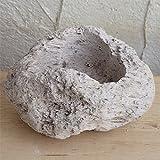 山野草鉢:さつま軽石鉢 Mサイズ(2.5号~3号苗用) 2個セット ノーブランド品