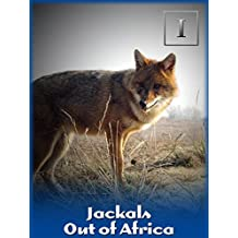 Jackals - Out of Africa