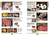 改訂新版 海水魚 ひと目で特徴がわかる図解付き (ネイチャーウォッチングガイドブック) 画像
