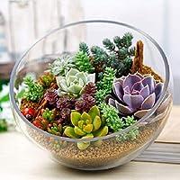 発芽SEEDS:多肉種160pcs Lithops Pseudotruncatella盆栽の植物の種子を混ぜ、lithop