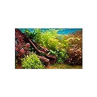 Penn Plax LB4 Fresh Water Plants 3d Depth Aquarium Background 20 Gallon