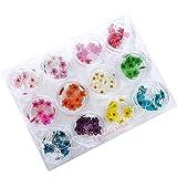 ドライフラワー 上質 押し花 こでまり ネイル パーツ レジン 封入 120枚ケース入 12色×各10枚