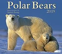 Polar Bears 2019