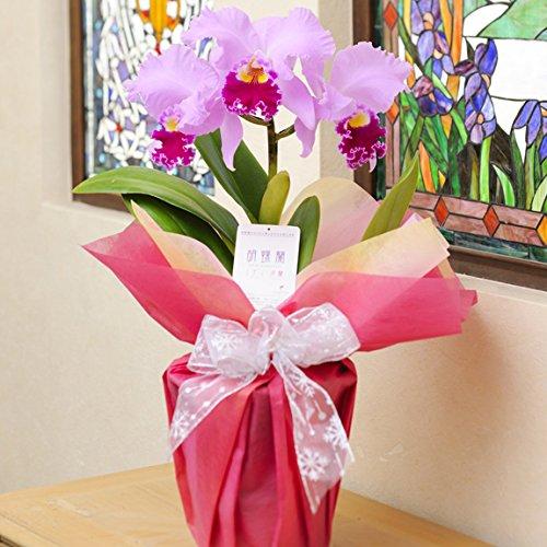 カトレア ラベンダー3輪【ビジネスフラワー】<開店・開院祝い 誕生日プレゼント 長寿祝いなど各種お祝いにおすすめ>