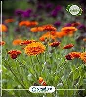 SEEDのCATEGORY:夏期キッチンガーデン植物の種子のためにスコットランドのマリーゴールドミックスキッチンガーデンの種