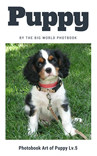 Puppy by The Big World Photobook : Photo book dog, Dog photography,The Dog,My Dog,Cats,Dog,Cat Dog,Black Cat,White Kitten,Cat Memes,Black Kitten,Kittens,Kitten ... (Photobook Art of Puppy 5) (English Edition)