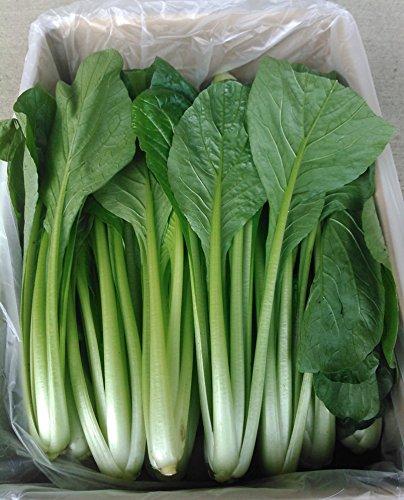 新菜園 小松菜 業務用 8kg JGAP認証取得