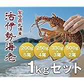 宮崎産活きイセエビ 1kgセット