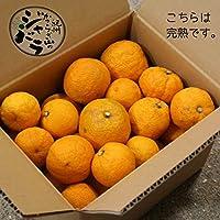 和歌山産「ジャバラ」訳ありB級品 新岡農園の柑橘フルーツ「紀州かつらぎ山じゃばら」(不揃い・傷あり/ご本人以外発送できません)生果実3Kg 花粉の季節に