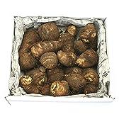 いも 芋煮会本場 山形の土つき里芋 1.5kg