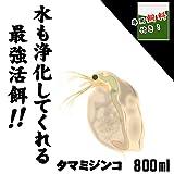 ( オススメ)タマミジンコ 増量 800ml(200匹~)+ ミジンコ育成・増殖促進飼料10g [生体]