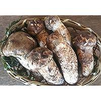 国産 厳選 生松茸(蕾又は開き)約150g 冷蔵便にて出荷致します。