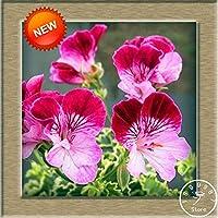 30个/ブロットゼラニウムの種子多年生の花の種17色がありますペラルゴニウムゾナールガーデン、0Bewx9:175