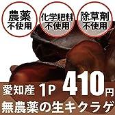 無農薬 肉厚生キクラゲ 65g
