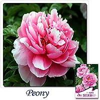購入する2集めることができます)1パック6種子の香りの良い巨大なピンクの牡丹の花の種A154-B