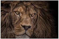 """JP London Solvent Free Poster Art Print PAPXL1X375633 Brink of Extinction Lion Head Africa Face Ready to Frame Wall 60"""" h by 40"""" w [並行輸入品]"""