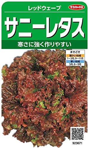 サカタのタネ 実咲野菜3671 レッドウェーブ サニーレタス 10袋セット