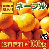 熊本産 訳あり ネーブル 10kg  【 九州 熊本 網田 みかん ミカン オレンジ 柑橘 】